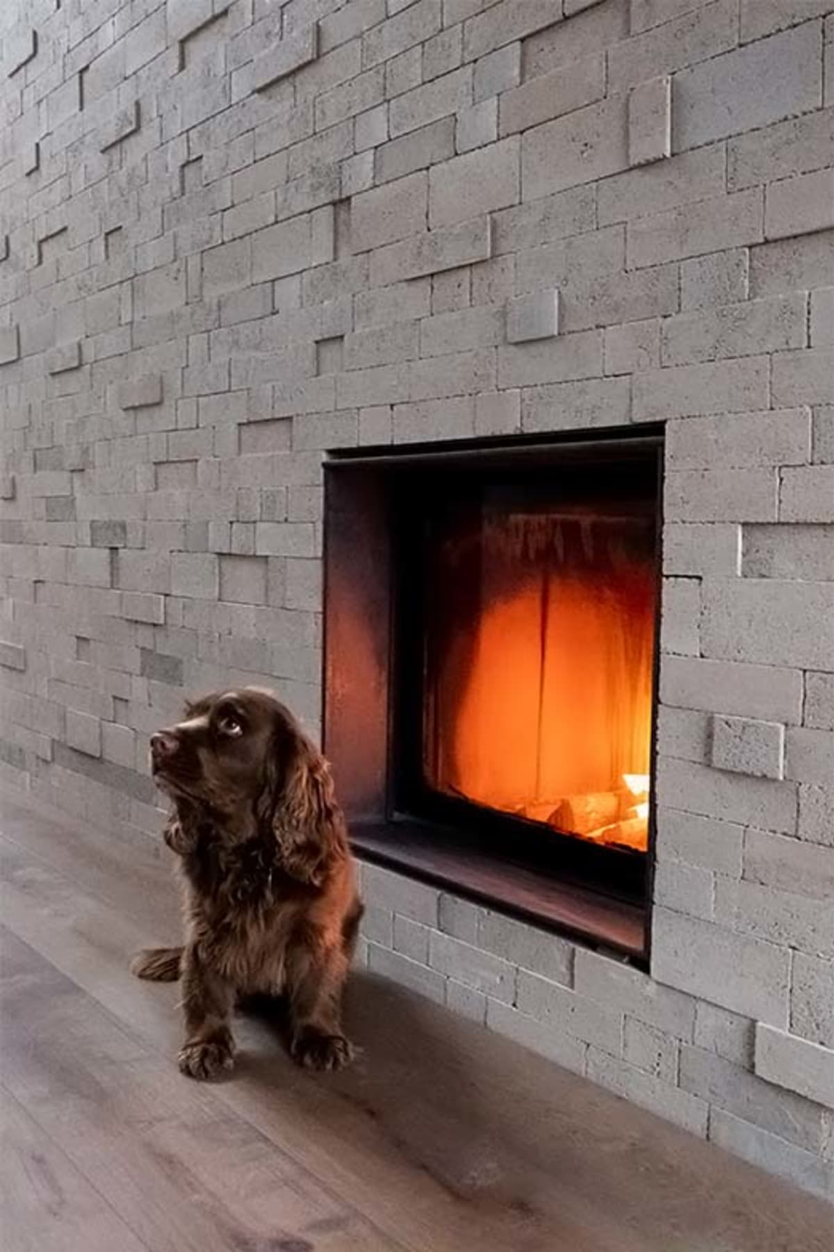 Internal brick wall with fireplace and dog