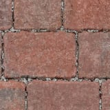 tegula priora - red and charcoal multi