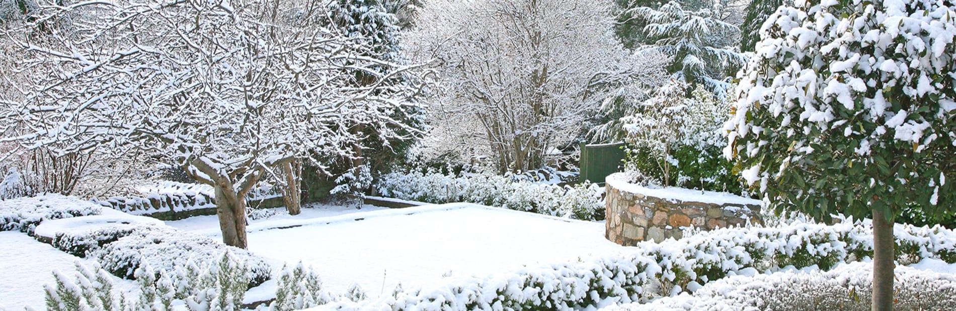 Snow on a tree