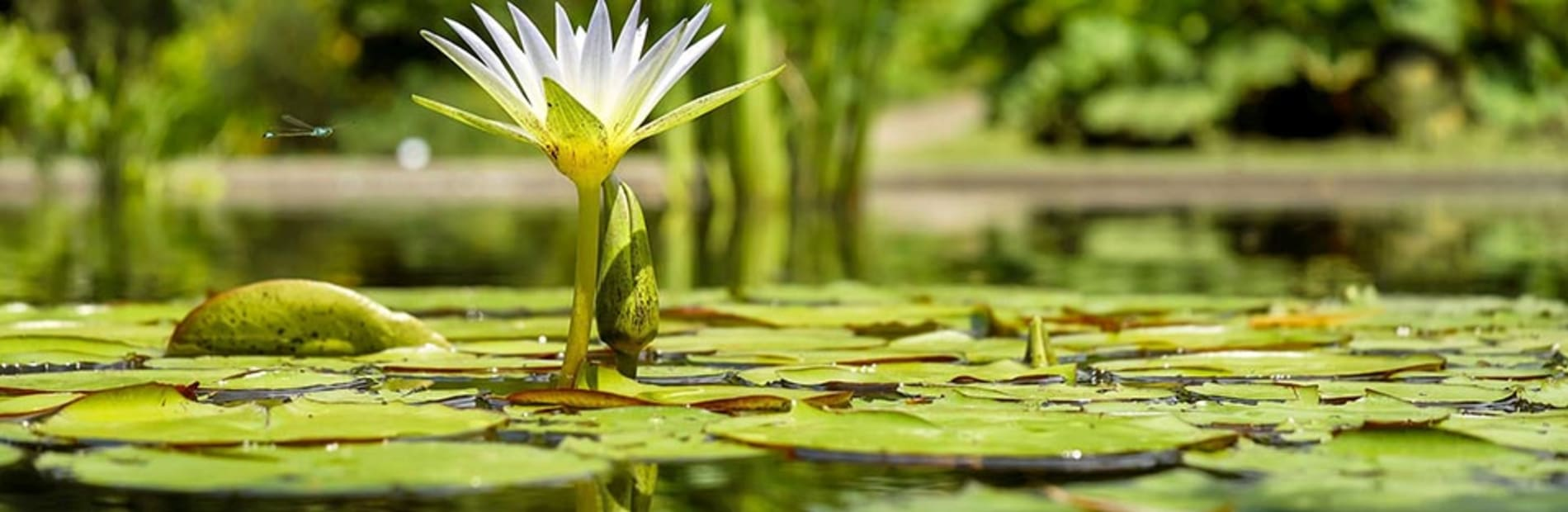 how to create your perfect pond