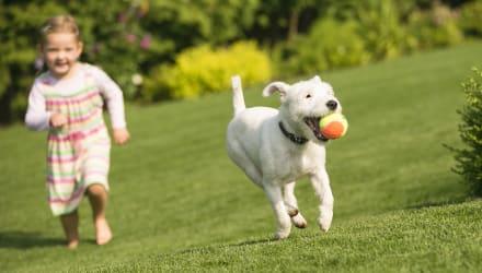 7 ways to create a pet friendly garden