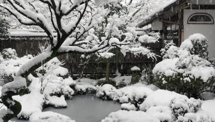 winter garden preparation