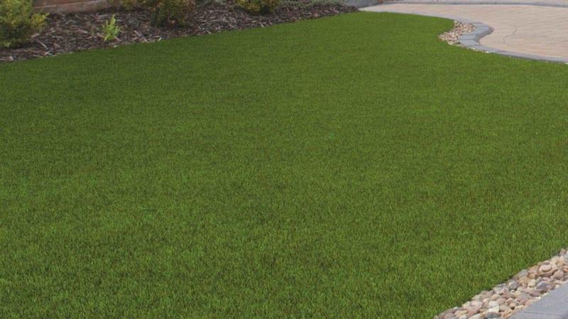 Always Green - Summer Lawn