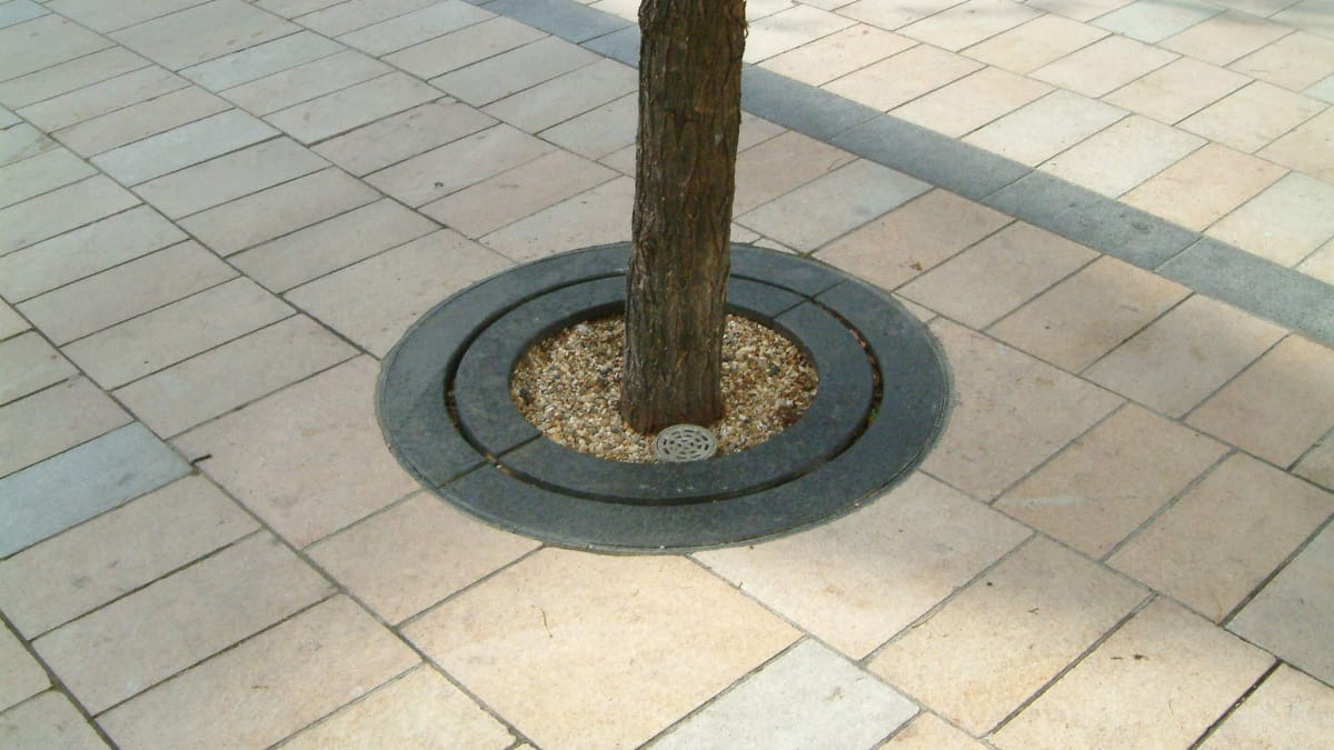 tree surround laid in paving