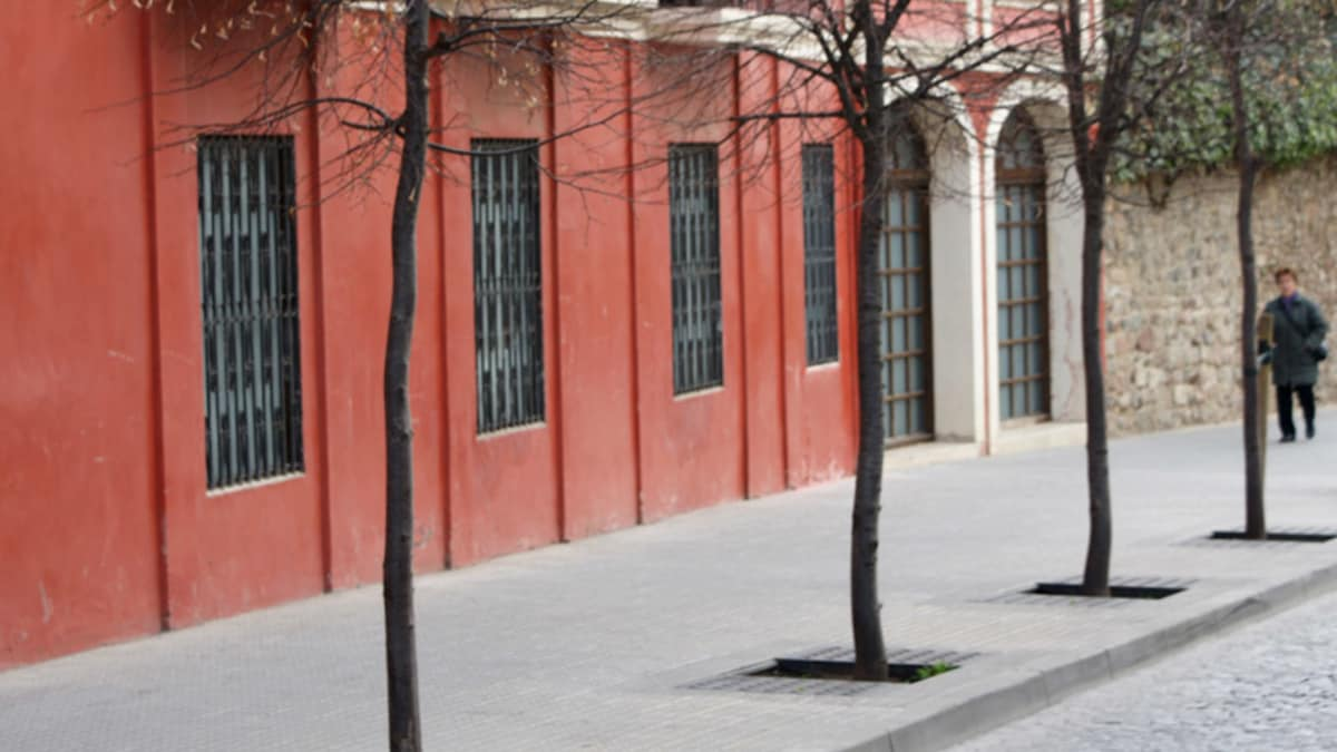 tree surrounds in paving next to a red building