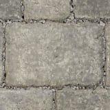 tegula priora - pennant grey