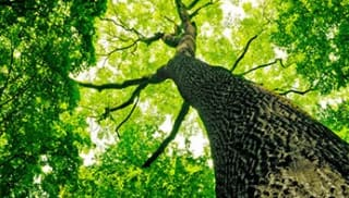 The need for trees