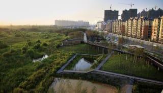 A large eco-system alongside a urban housing development