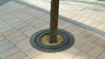 Carmel Tree Surround