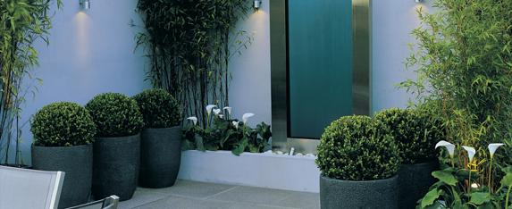 Greenery displayed in a garden patio.