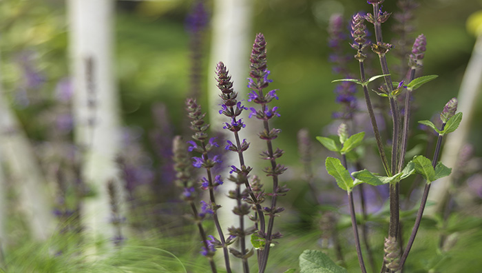 Where to invest your money when redesigning your garden